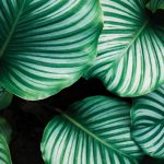 Minder ziekteverzuim door de aanwezigheid van planten op kantoor